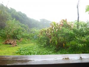 Saison des pluies dans Vie à Lifou p1070987-300x225